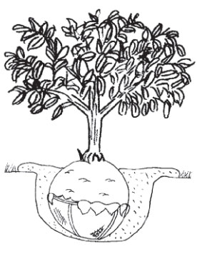 placing-plant