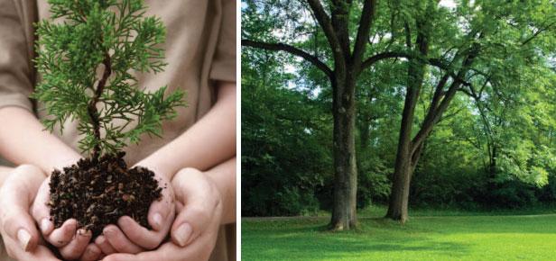 tree-shurbs