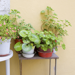 decorating-with-houseplants-1
