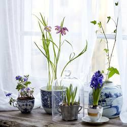 potted spring flowers in vintage flower pots