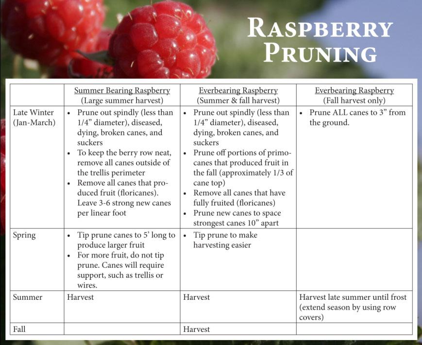raspberry-chart