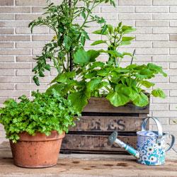 single-pot-garden-1