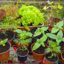 single-pot-garden-2