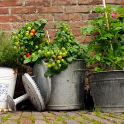 single-pot-garden-3